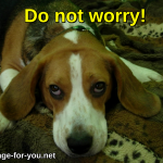 Beagle Dog Do not worry