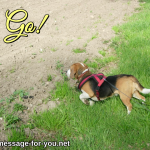 Beagle Dog Go!