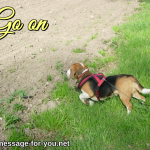 Beagle Dog Go on