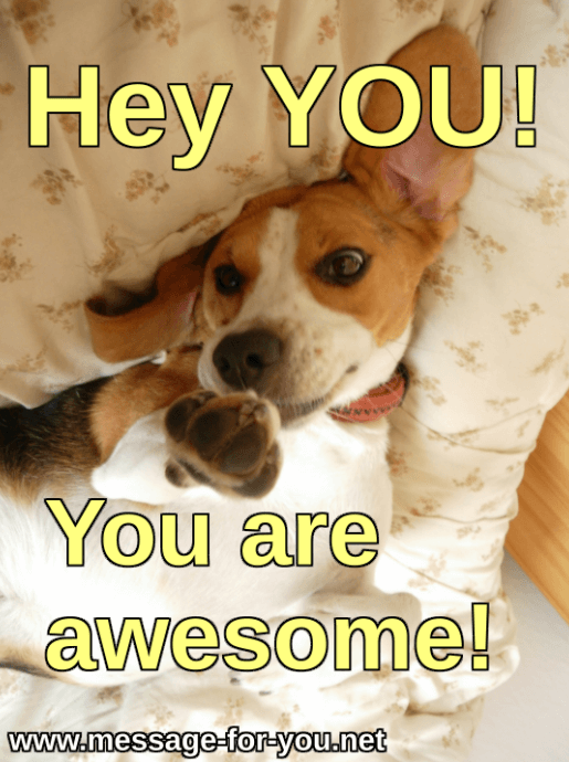 Beagle Dog Hey You are awesome