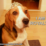 Beagle Dog I Am Royalty