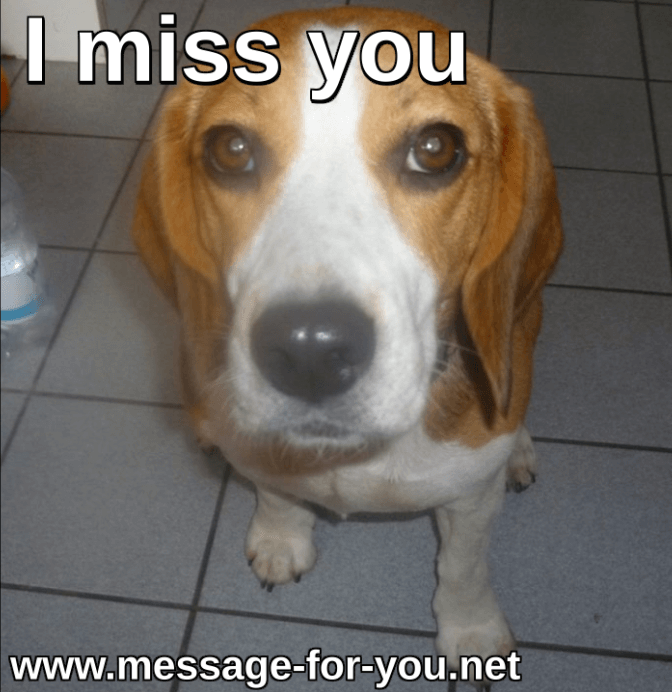 Beagle Dog I Miss You