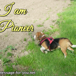 Beagle Dog I am a Pioneer