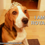 Beagle Dog I am royal