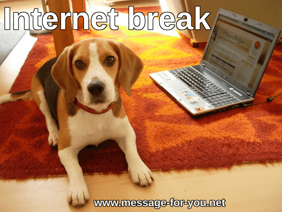 Beagle Dog Internet break