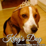 Beagle Dog Kings Dog