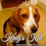 Beagle Dog Kings Kid