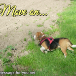 Beagle Dog Move on