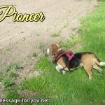 Beagle Dog Pioneer