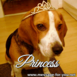 Beagle Dog Princess