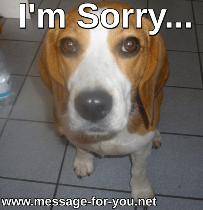 Beagle Dog Saying Sorry