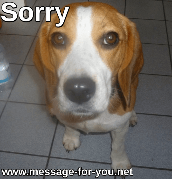 Beagle Dog Saying Sorry_2