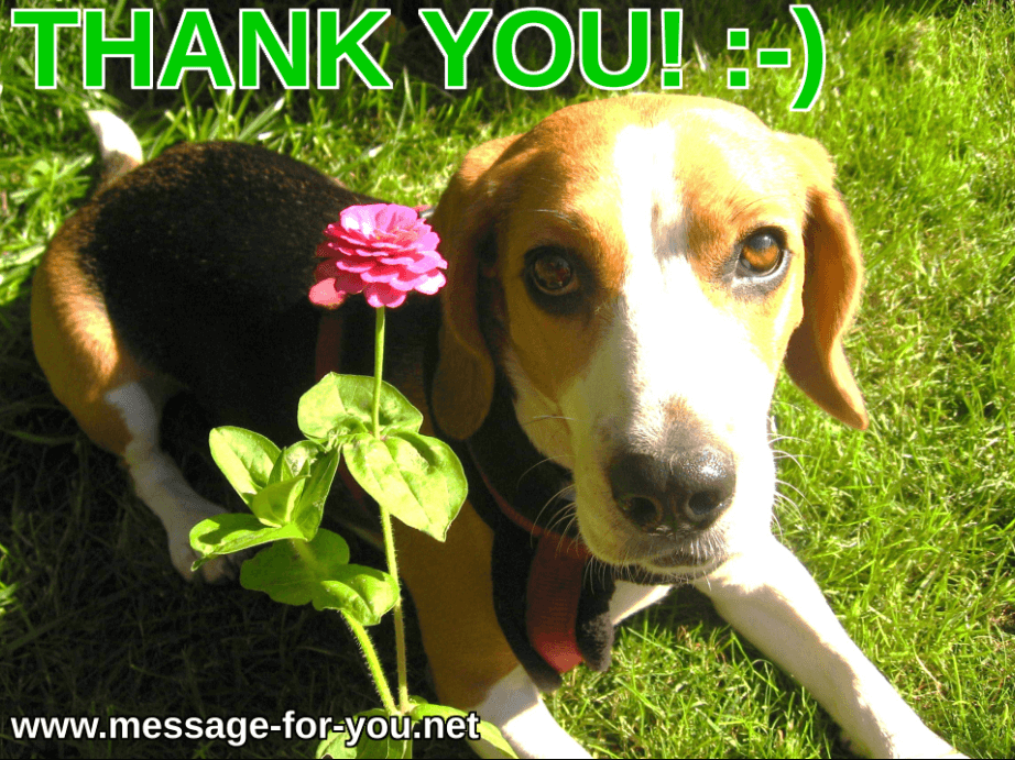 Beagle Dog Says Thank You