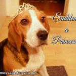Beagle Dog Suddenly a Princess