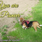 Beagle Dog You are a Pioneer