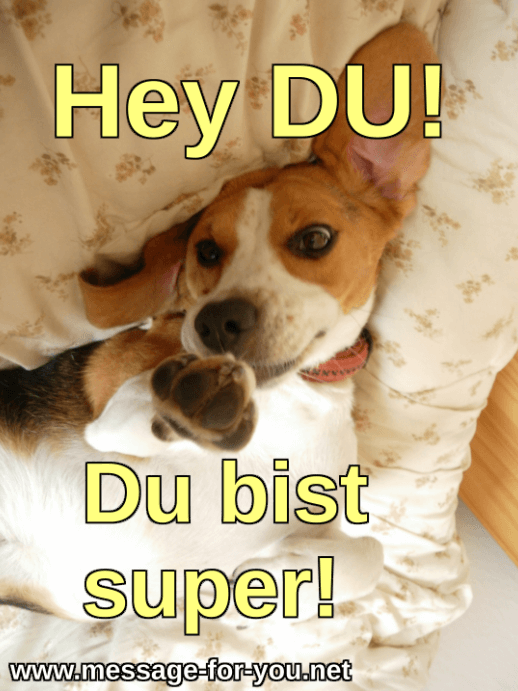 Beagle Dog You are awesome german