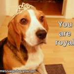 Beagle Dog You are royal