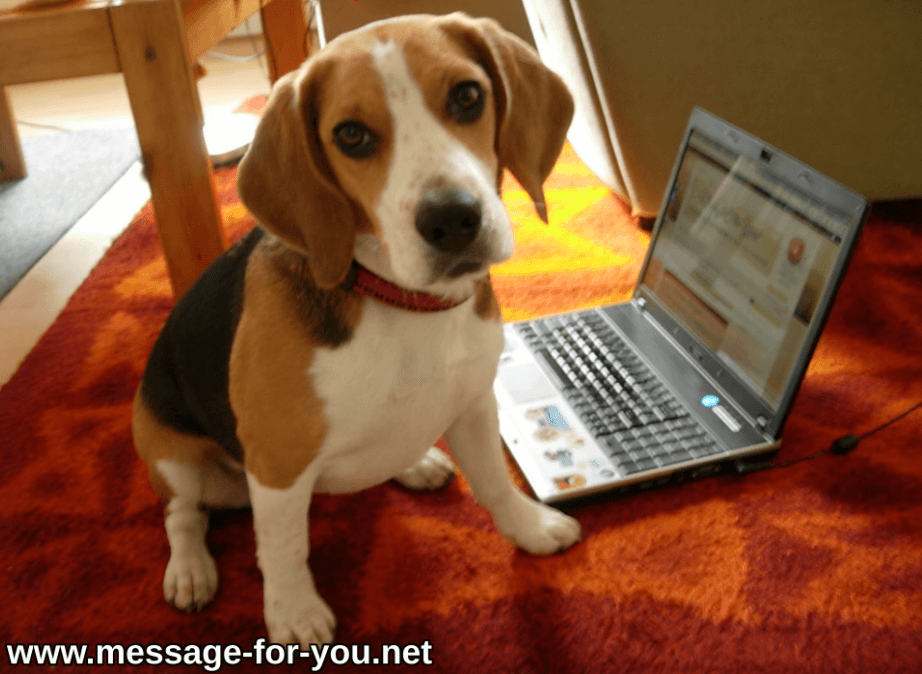 Beagle Dog infront of Laptop Computer PC Screen