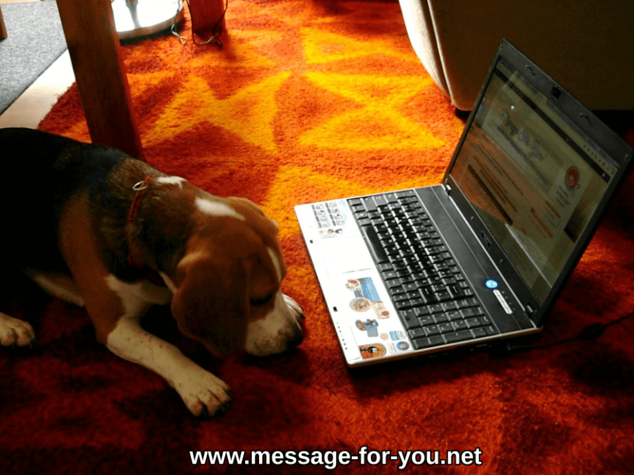 Beagle Dog waits for comments e-mail feedback