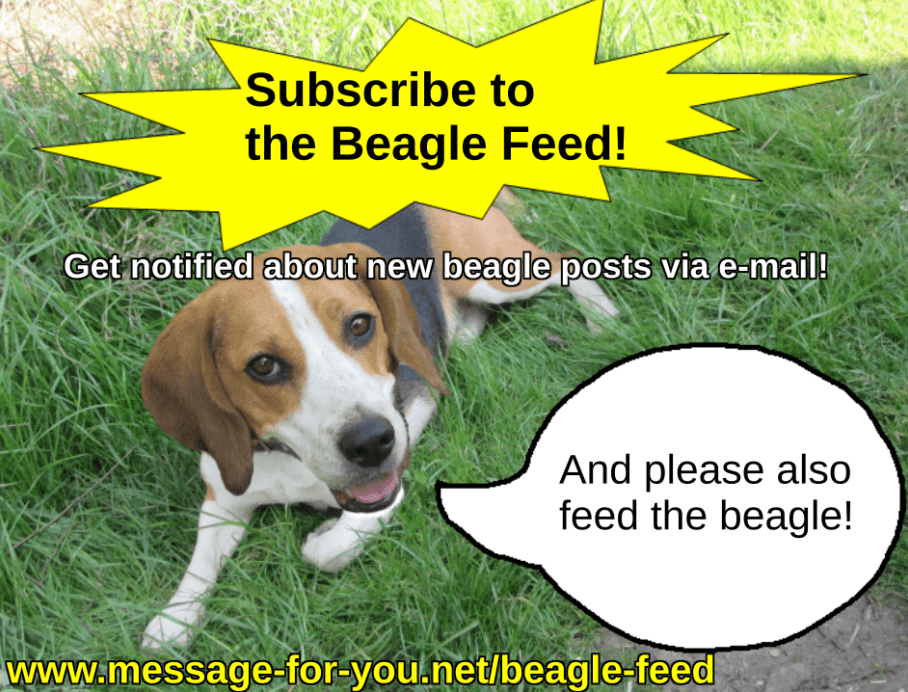 Beagle Feed Dog Blog Abonnement