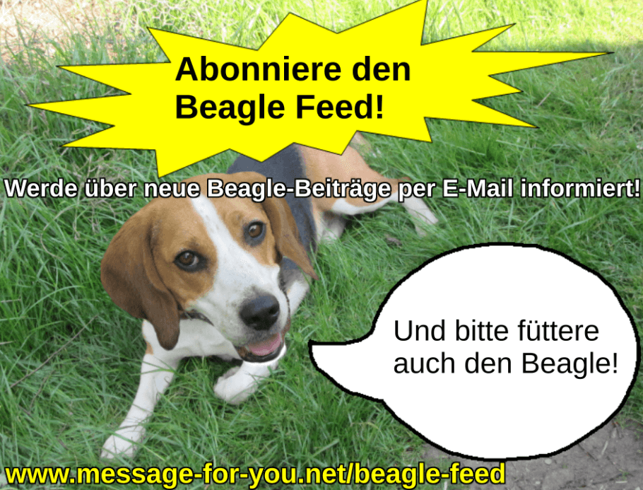 Beagle Feed Hund Blog Abonnement