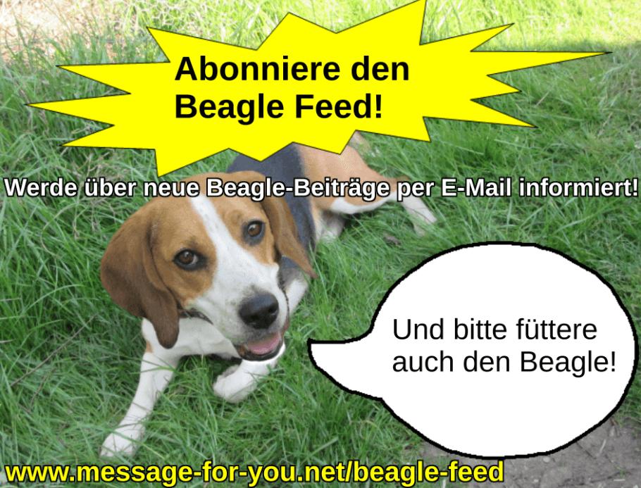 Beagle Feed Hund Blog Abonnement