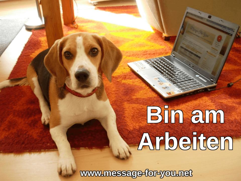 Beagle Hund Bin am Arbeiten