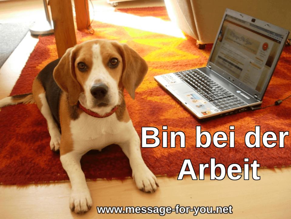 Beagle Hund Bin bei der Arbeit
