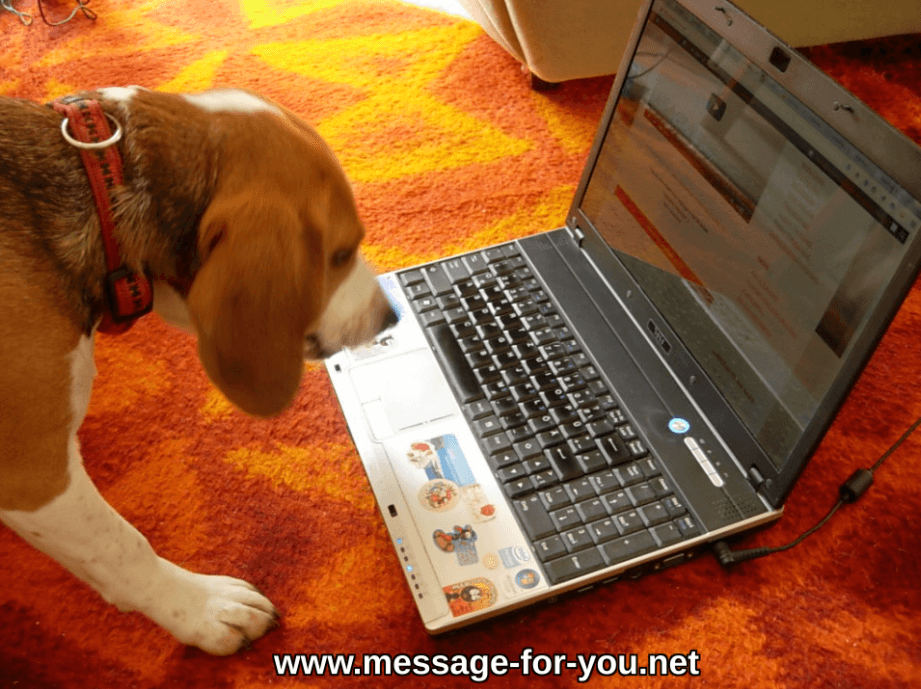 Beagle Hund Dog Typing Tippt PC