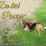 Beagle Hund Du bist ein Pionier