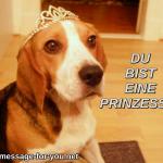 Beagle Hund Du bist eine Prinzessin