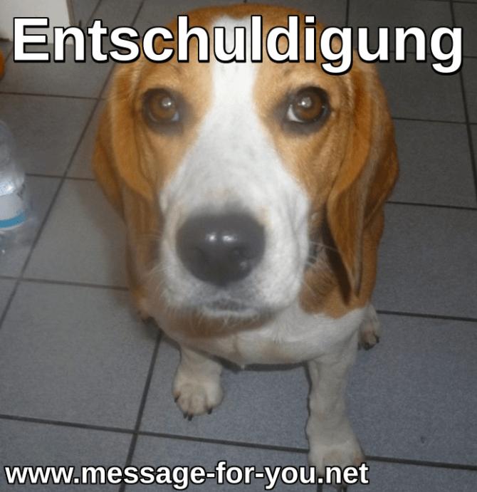 Beagle Hund Entschuldigung_2