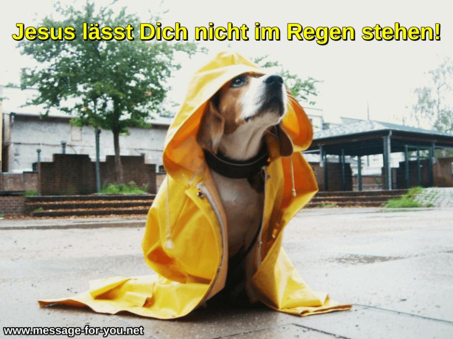 Beagle Hund Gelber Regenmantel