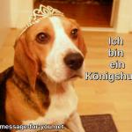 Beagle Hund Ich bin ein Koenigshund