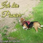 Beagle Hund Ich bin ein Pionier