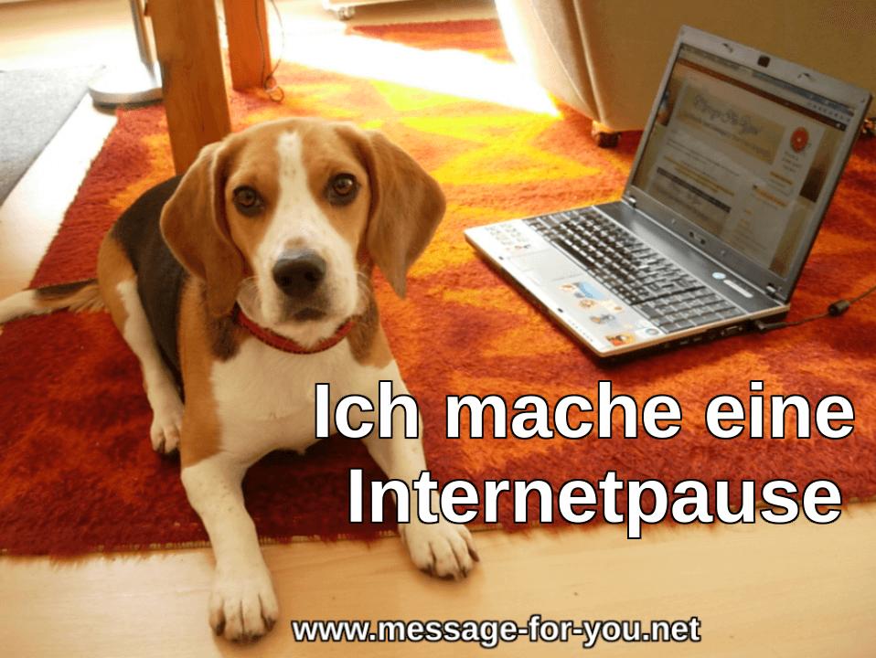 Beagle Hund Ich mache eine Internetpause