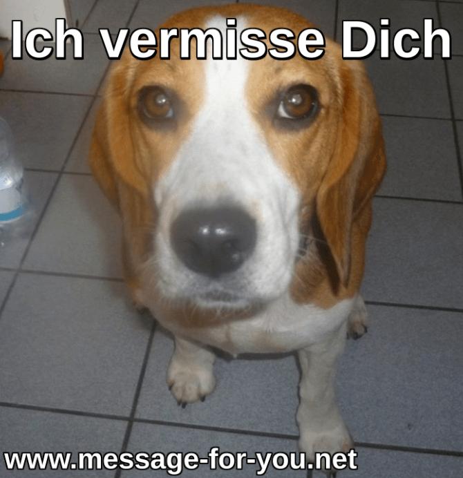 Beagle Hund Ich vermisse Dich