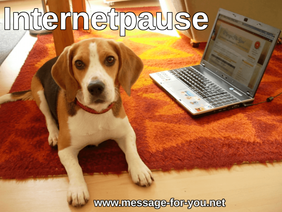 Beagle Hund Internetpause