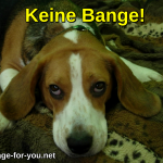 Beagle Hund Keine Bange