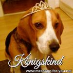 Beagle Hund Koenigskind