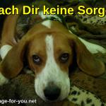 Beagle Hund Mach Dir keine Sorgen