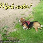 Beagle Hund Mach weiter