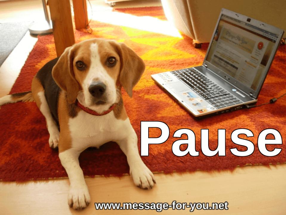 Beagle Hund Pause