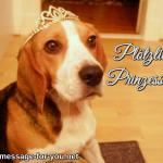 Beagle Hund Ploetzlich Prinzessin