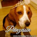 Beagle Hund Prinzessin