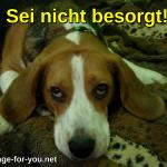 Beagle Hund Sei nicht besorgt