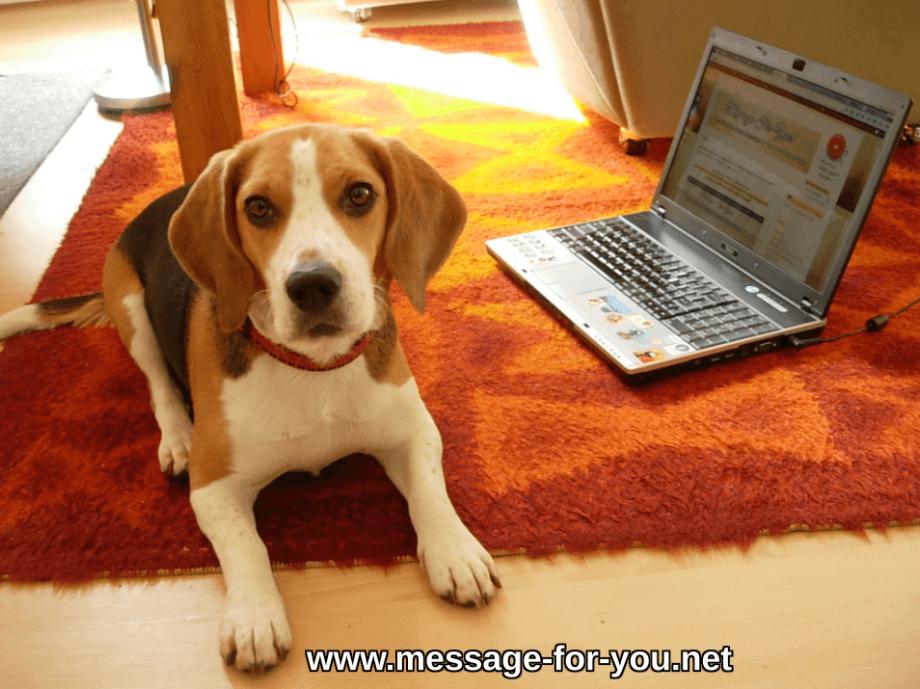 Beagle Hund am vor Laptop Computer PC Bildschirm