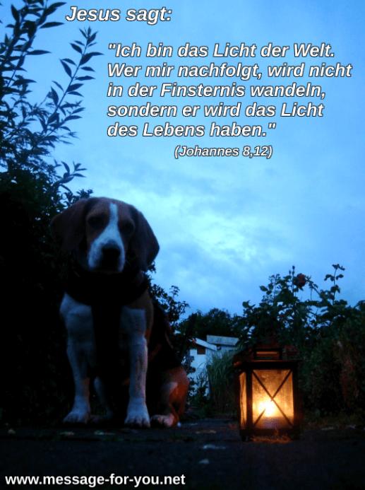 Beagle Hund mit Laterne