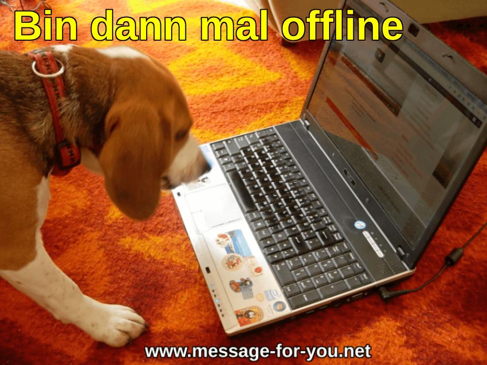 Beagle Hund sagt Bin dann mal offline