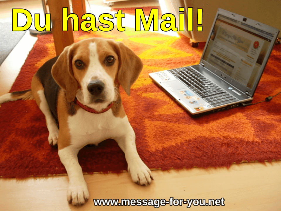 Beagle Hund sagt Du hast Mail